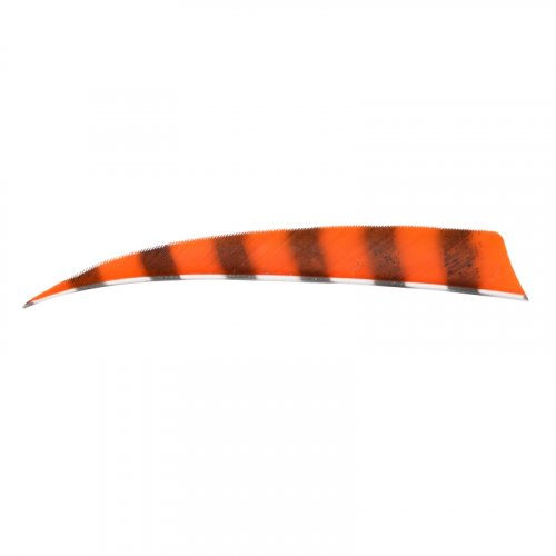 "Naturfeder Shield 4"" orange barred"